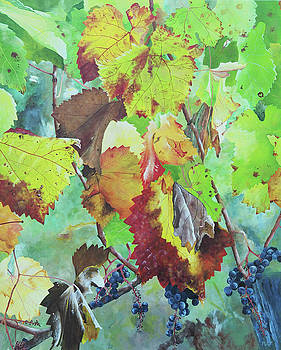 Bordeaux Vineyard 5 by Steven Fleit