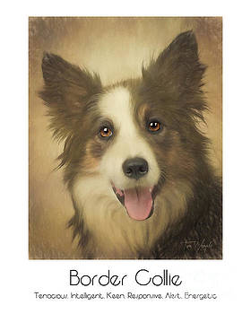 Border Collie Poster by Tim Wemple