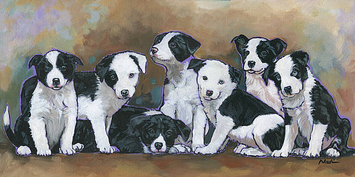 Border Collie Puppies by Nadi Spencer