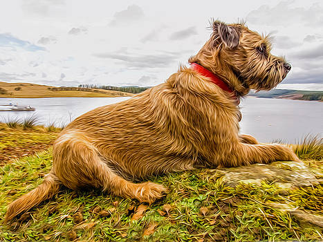 Border Terrier Dog by Tanya Hall