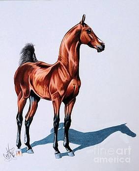 Born To Rage Saddlebred Colt by Cheryl Poland
