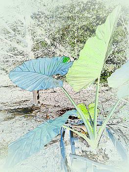 Robert G Kernodle - Borneo Giant Abstract