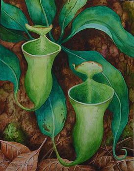 Edoen Kang - Borneo Nepenthes Campanulata