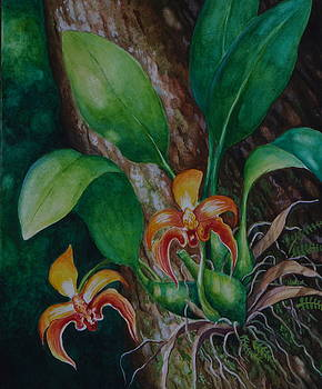 Edoen Kang - Borneo Orchid B.Auriculatum