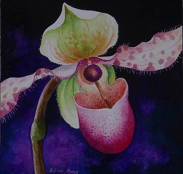 Edoen Kang - Borneo Orchid P Chiquita