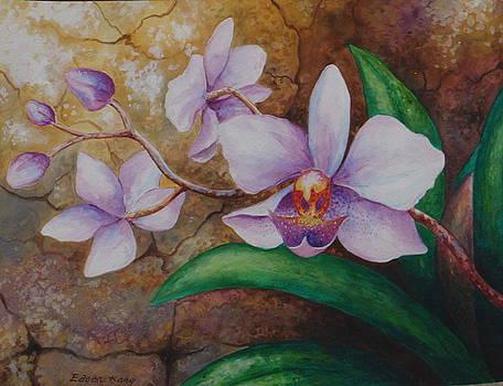 Edoen Kang - Borneo Orchids 2