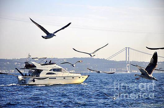Andrew Dinh - Bosborus Seagulls