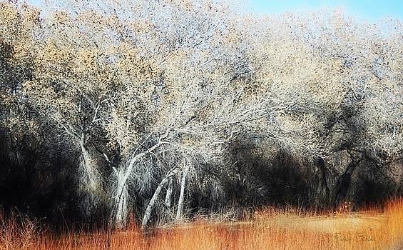 Bosque Del Apache In January by Barbara Chichester