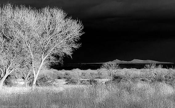 Bosque del Apache - Infrared by Britt Runyon