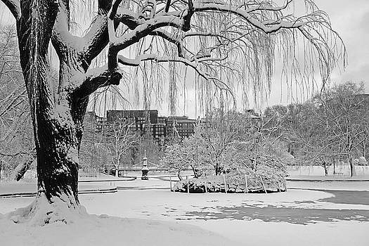 Boston Public Garden Tree Covered in Snow Boston MA Black and White by Toby McGuire