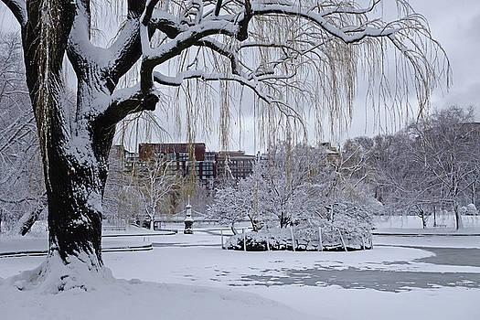 Toby McGuire - Boston Public Garden Tree Covered in Snow Boston MA