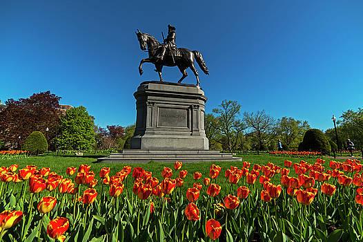 Toby McGuire - Boston Public Garden Tulips Boston MA