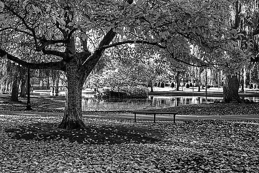 Toby McGuire - Boston Public Garden Yellow Autumn Tree Boston MA Black and White