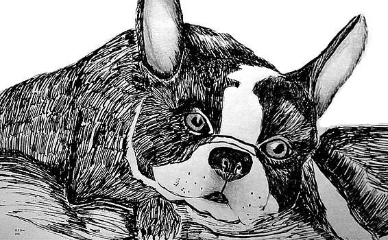 Maria Urso  - Boston Terrier 15-01A