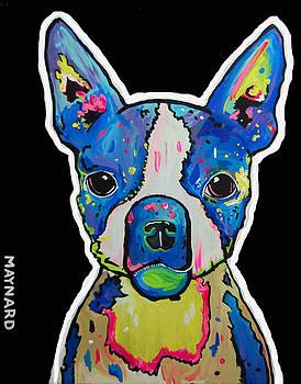 Boston Terrier by Andrew Maynard