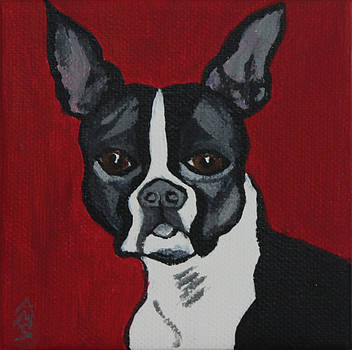Boston Terrier by Annette M Stevenson