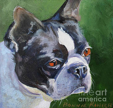 Boston Terrier by Bonnie Rinier