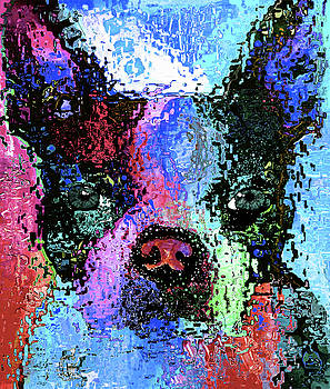 Boston Terrier by Nixo by Nicholas Nixo