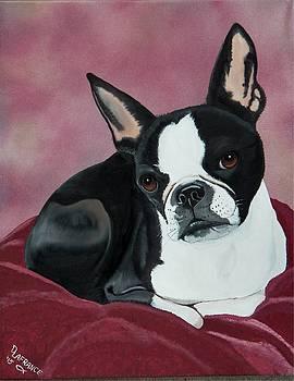 Boston Terrier by Debbie LaFrance