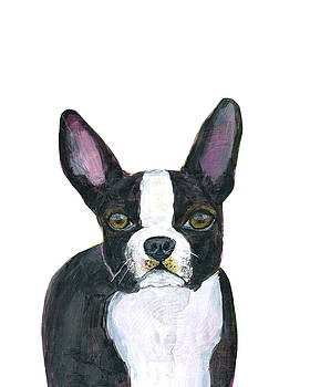 Boston Terrier Dog by Blenda Studio