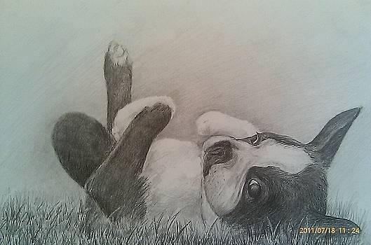 Boston Terrier by Heidi Smith