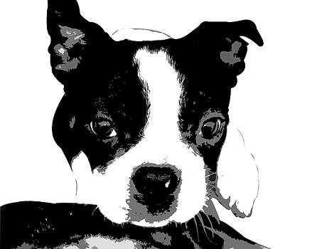 Kathy Stanczak - Boston Terrier Portrait