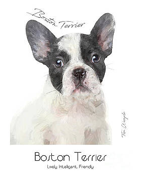 Boston Terrier Poster by Tim Wemple