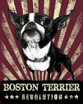 John LaFree - Boston Terrier Revolution