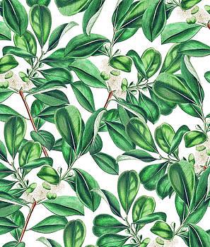 Botanica by Uma Gokhale