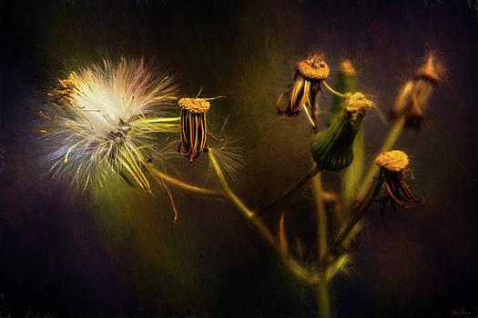 Botanical Life Cycle by John Rivera