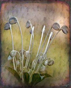 Chris Lord - Botanical Specimen