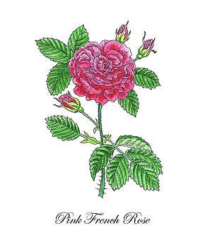 Botanical Watercolor Of French Rose by Irina Sztukowski