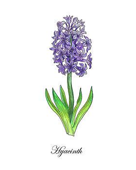 Botanical Watercolor Of Hyacinth Flower by Irina Sztukowski