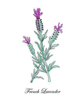 Botanical Watercolor Of Lavender Flower by Irina Sztukowski