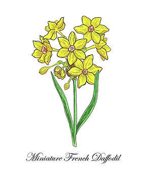 Botanical Watercolor Of Miniature Daffodil  by Irina Sztukowski