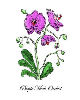 Botanical Watercolor Of Moth Orchid by Irina Sztukowski