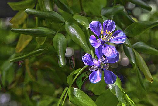 James Woody - Botanical14