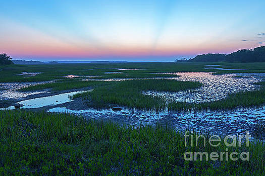 Botany Bay Marsh by Steven Dillon