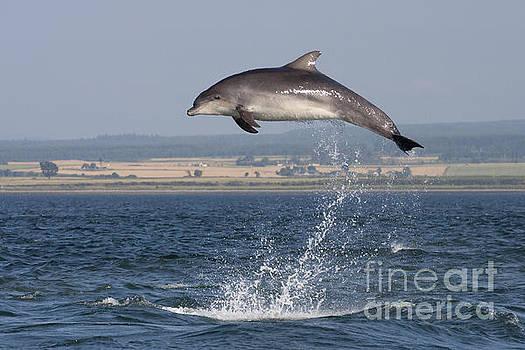 High Jump - Bottlenose Dolphin  - Scotland #42 by Karen Van Der Zijden