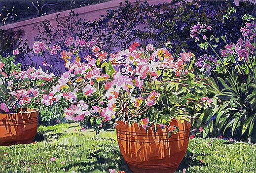 Bougainvillea Flower Pots Beverly Hills by David Lloyd Glover