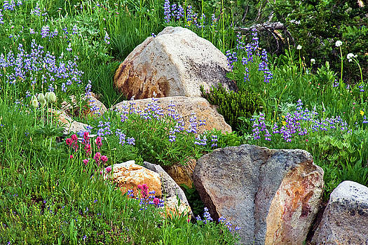 Boulder Blooms by Marla Craven