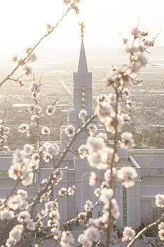 Dustin  LeFevre - Bountiful Spring