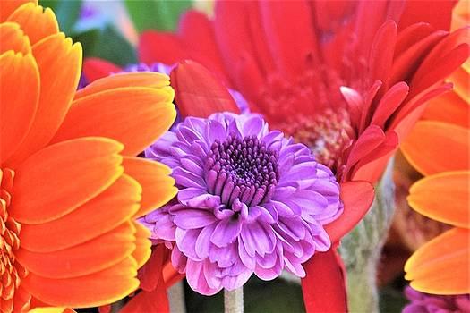 Bouquet 5 by John Glass