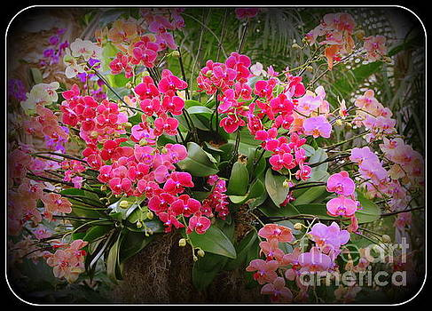 Bouquet of Colorful Orchids by Dora Sofia Caputo Photographic Art and Design