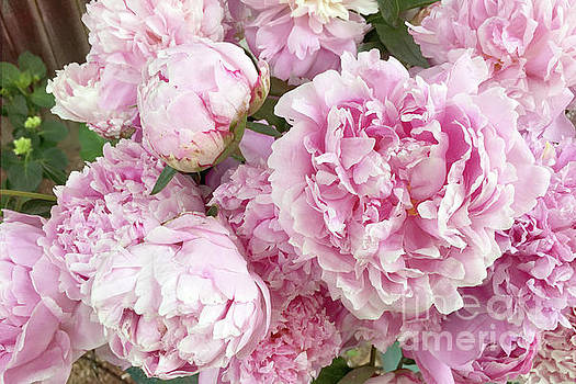 Kathy Fornal Artwork Collection: Roses-Peonies-Ranunculus Shabby ...