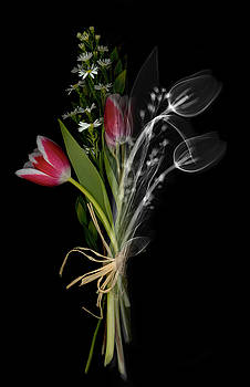 Ted Kinsman - Bouquet X-ray