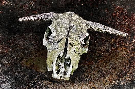 Bovine Skull by Stephanie Calhoun
