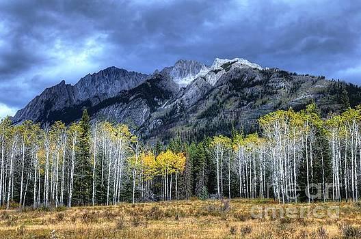 Wayne Moran - Bow Valley Parkway Banff National Park Alberta Canada II