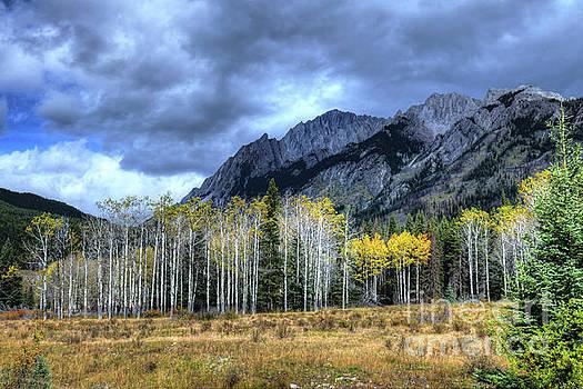 Wayne Moran - Bow Valley Parkway Banff National Park Alberta Canada III