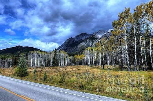 Wayne Moran - Bow Valley Parkway Banff National Park Alberta Canada